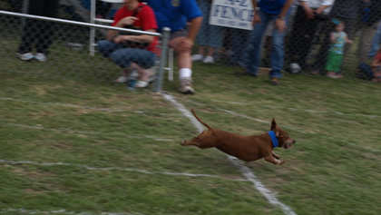 Buda Weiner Dog Races