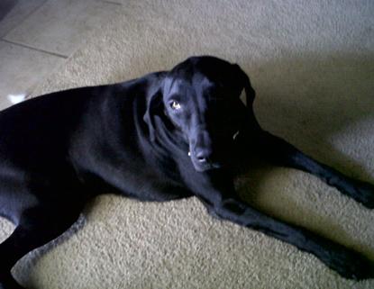 Jackson Miller, dog