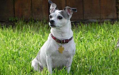 Jasmine, dog