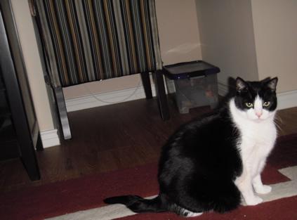 Max, cat