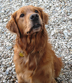 Oakley, dog