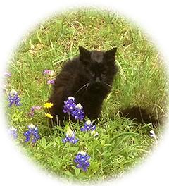velvet, cat